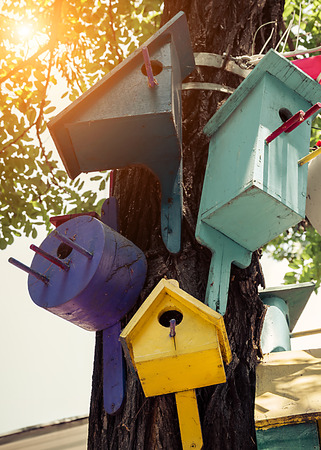 Nature sunrise spring songbird concept colorful bird nesting boxes on a tree, birdhouse handmade. Banque d'images