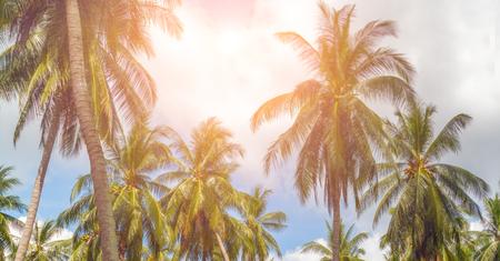 열 대 리조트 태양 광선 코코넛 나무 화창한 날 여름 풍경