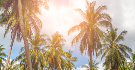 Tropical resort sun rays coconut tree sunny day summer landscape Foto de archivo