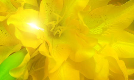 Yellow lily flower nature floral Hemerocallis spring for womens day or mothers day Banque d'images - 121047114