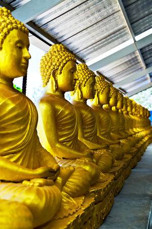 Golden Buddha statue sitting lotus in buddhist temple. Buddhist holiday - Happy Bodhi day achieved enlightenment.