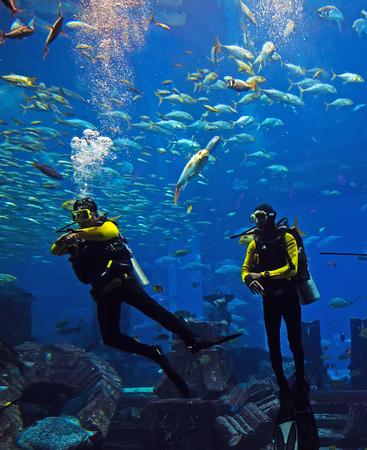 Scuba Diver Swimming in wetsuit neoprene, Spear fisherman with speargun rubbers Underwater blue ocean background in sea