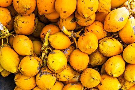 Coconuts orange. King coconut fruits Yellow bunches palm coco tree Sri Lanka