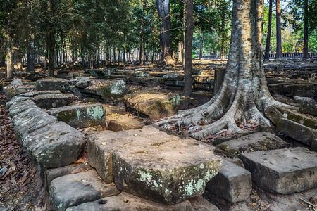 Roots of a strangler fig tree overtake the stone temple complex of Angkor Wat, Cambodia