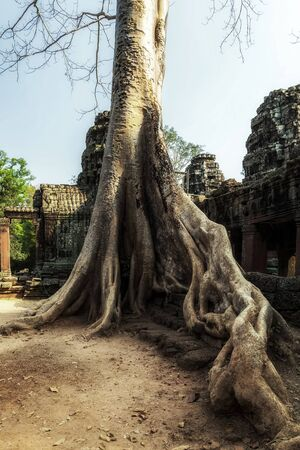 Asian tropical jungle Angkor Wat Archaeological Park in Siem Reap, Cambodia UNESCO World