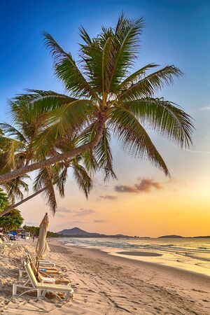 Palm tropical sea beach at sunny day. Landscape background