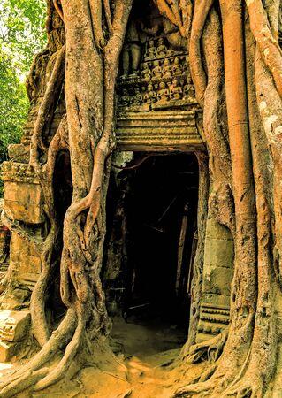 Cambodia Landmarks temple ruins jungle Angkor Wat complex.