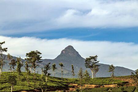 Mountain Adam's Peak temple and highland tea estate Sri Lanka Stock Photo