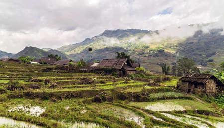 Rice terraces Wheat crop field Landscape