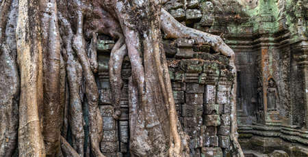 Ta Prohm Khmer ancient Buddhist temple in Cambodian jungle forest, fig trees took root wat, Cambodia complex Angkor Wat in Siem Reap District