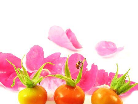 nature  composite: ladybug on fruit wild rose and pink petals on white background photo