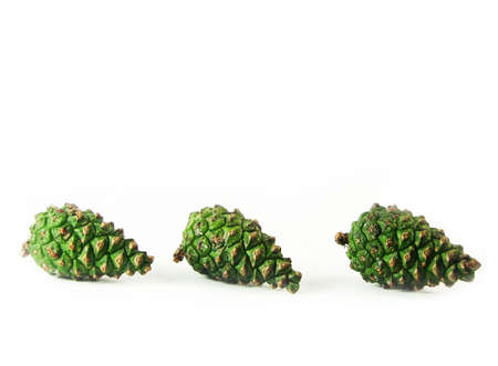 pine three: nature, forest:  three green  cones in row  pine on wite background