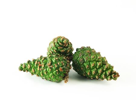 pine three: nature, forest:  three green pine cones on wite background