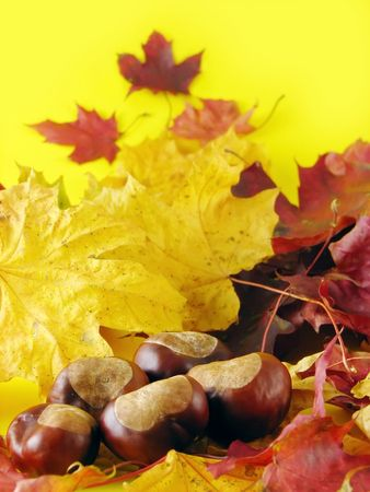 autumn composition: dry leaves and chestnuts on yellow background Standard-Bild