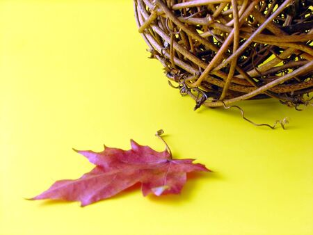 implicated: autumn composition: dry leaf and ball from branches on yellow background