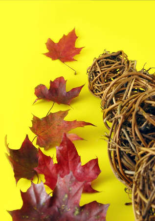 implicated: autumn composition: dry leaves and balls from branches on yellow background