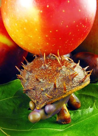 autumn composition from creative series: chestnuts hedgehog Stock Photo - 1834552