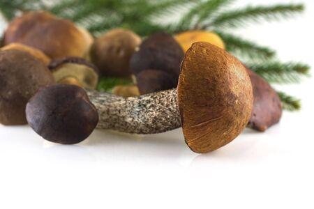 imege from season series: mushrooms on white Standard-Bild