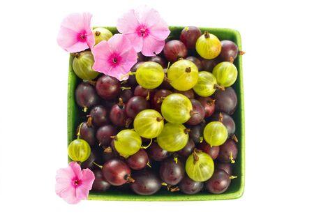 adn: serie de frutas: grosella roja y verde