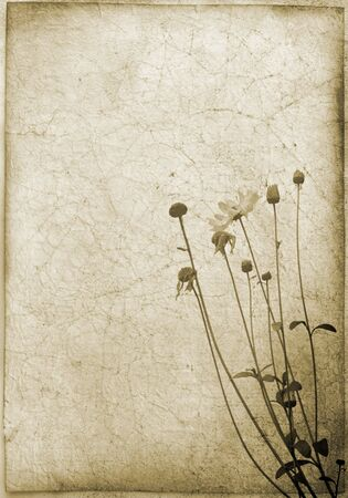 background series: dirty background with flower motive  photo