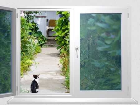 3d series: view from the window lane at cat
