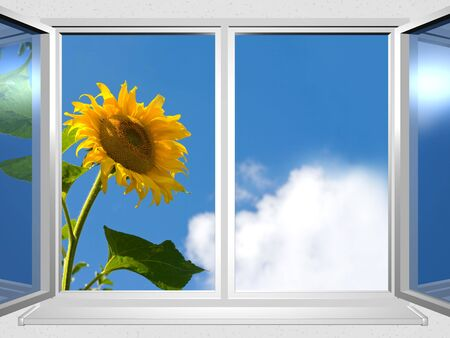 3d series: view from the window of sunflower