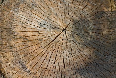 sawn: background series: sawn tree trunk