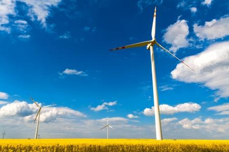 Summer landscape with energy wind turbines farm and rape field