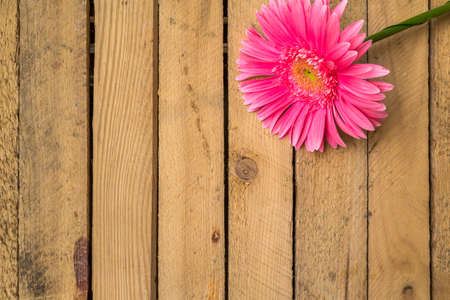 Composition with flower on a wooden table to the project Stock Photo