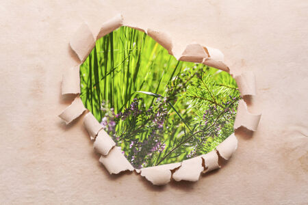 wedding table setting: Heart ripped out in the paper and in the middle of the meadow Stock Photo