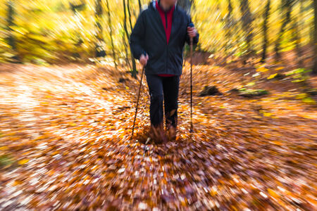 Cultivating the figure of a man in the autumn in the forest Nordic walking Фото со стока