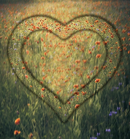 The frame in the shape of a heart emerging from the meadow photo