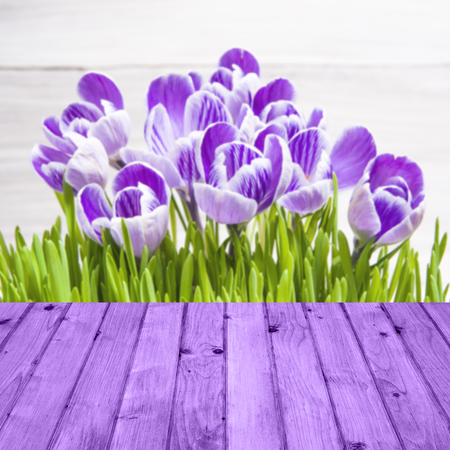 Spring background with crocuses and wooden panel