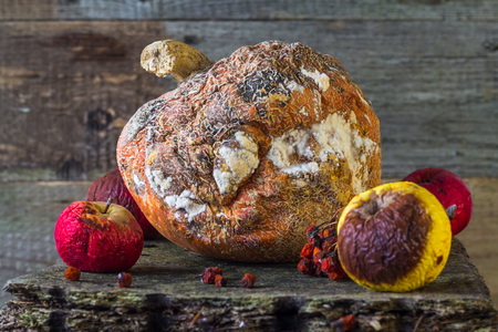 inedible: Old and rotten fruit on wooden board Stock Photo