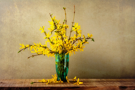 Still life with a bouquet of forsythia photo
