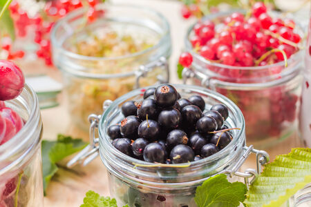 marmelade: Black, red and white currants, gooseberries and cherries in jars to preparations