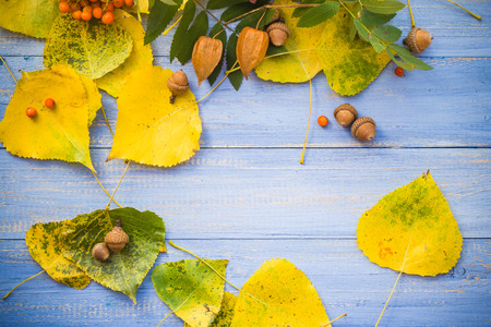 Autumn background: leaves and fruits on blue table