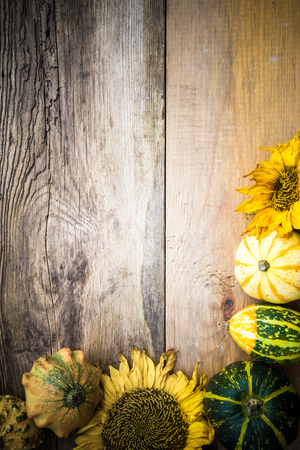 Autumn background with pumpkins on the old board Standard-Bild