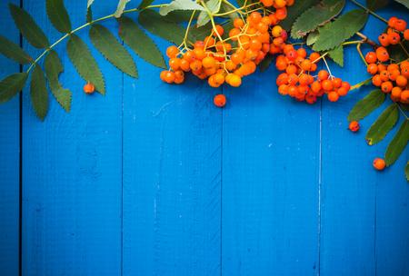 Autumnal background: rowan fruits on blue wooden board