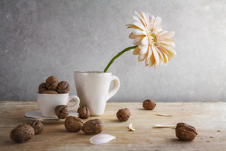 Still life with white gerbera in a cup and walnuts