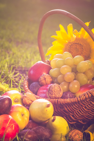 vegetable basket: A basket full of fruits on grass in the sunset light Stock Photo