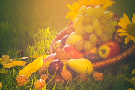 A basket full of fruits on grass in the sunset light photo