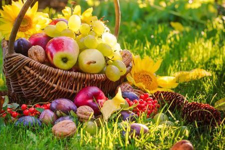 A basket full of fruits on grass in the sunset light Standard-Bild