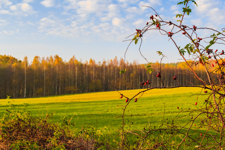orenge: Autumn landscape: a view of the fields and woods in autumn colors