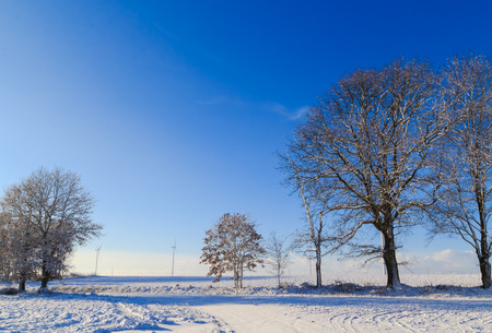 covered fields: Winter landscape with trees and snow covered fields and windmills Stock Photo