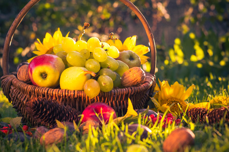 Autumn in the orchard: a basket of fresh fruit in the sunshine photo