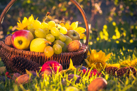corbeille de fruits: Automne dans le verger: un panier de fruits frais dans le soleil