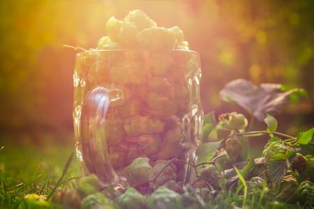 tankard: A glass mug full of green hop cones