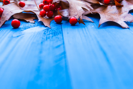 Autumn background with leaves and rowan fruit on blue boards