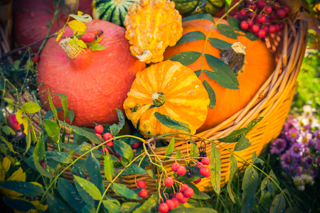 basket: Colorful pumpkins in basket: Autumn in the garden Stock Photo